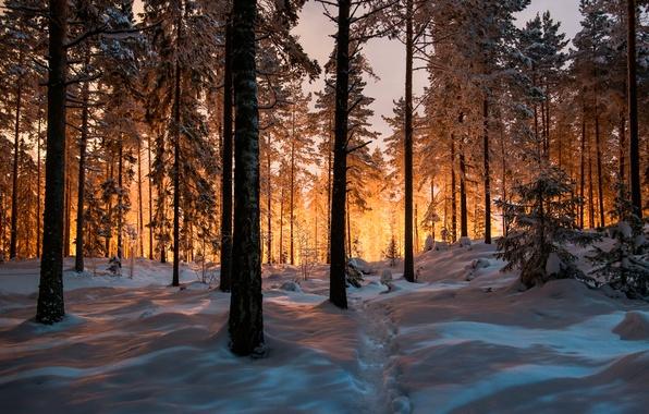 Картинка зима, лес, снег, тропа