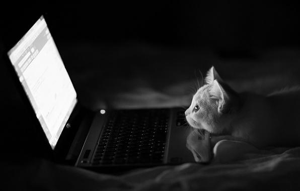 Картинка кошка, ночь, черно-белое, ноутбук, монохромное, Hannah, Benjamin Torode
