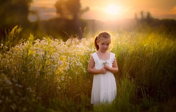 Картинка поле, лето, трава, девочка