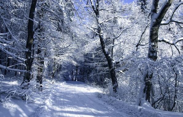 Картинка холод, зима, дорога, снег, деревья, пейзаж, автор, Janek Sedlar
