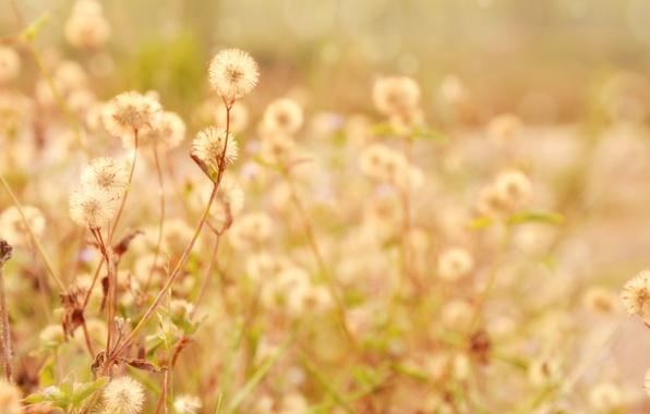 Картинка листья, макро, цветы, ветки, фон, растение, широкоформатные, полноэкранные, HD wallpapers, широкоэкранные
