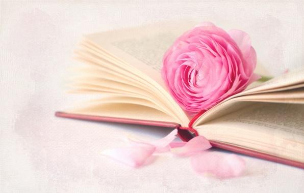 Картинка цветок, макро, фон, книга