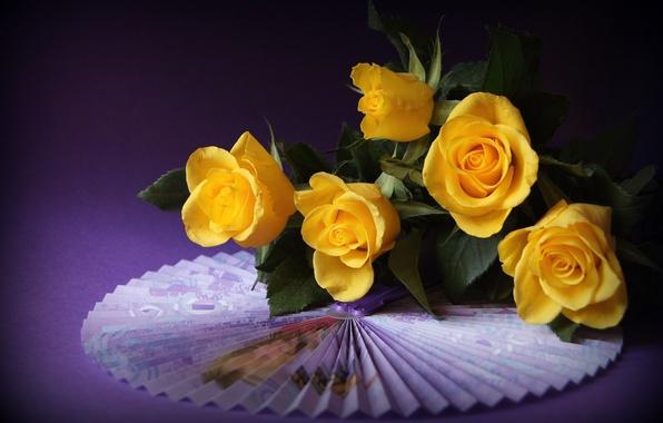 Картинка розы, веер, жёлтые, фиолетовый фон