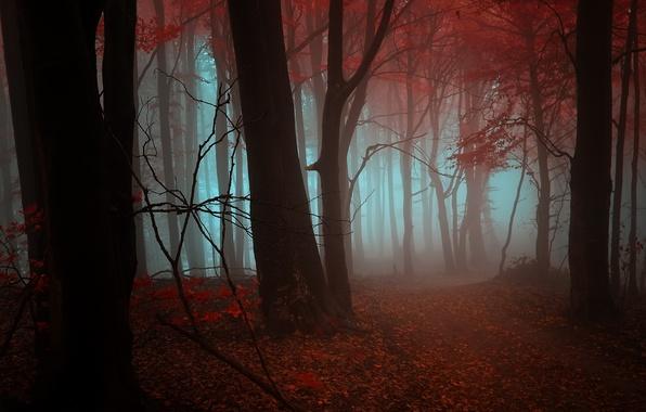Картинка осень, лес, листья, деревья, оранжевый, красный, туман