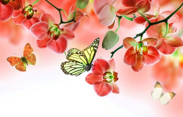 Картинка бабочки, цветы, орхидея, flowers, beautiful, orchid, butterflies