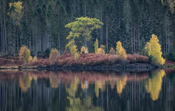 Картинка осень, лес, деревья, озеро, отражение