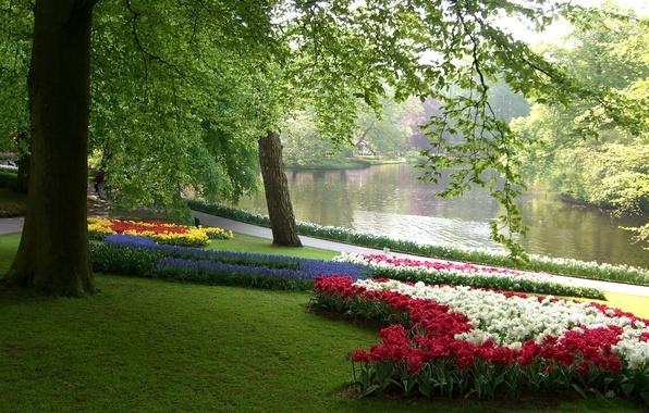 Картинка зелень, трава, листья, деревья, цветы, ветки, пруд, парк, тюльпаны, Нидерланды, разноцветные, нарциссы, клумбы, Keukenhof