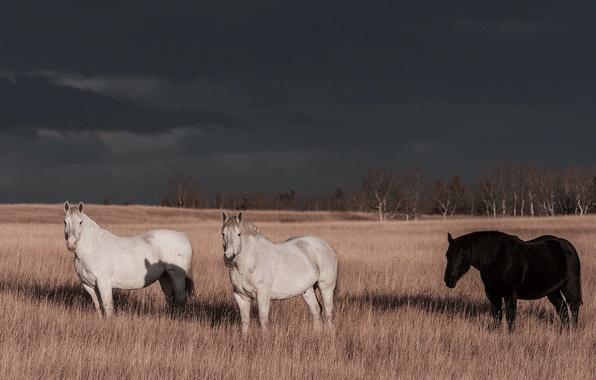 Картинка гроза, поле, облака, деревья, тень, лошади, солнечный свет