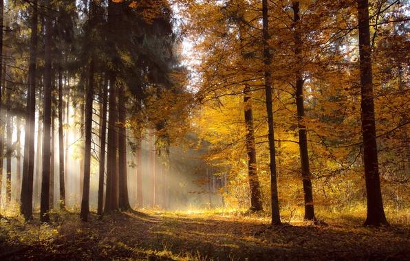 Картинка осень, лес, свет, природа, утро