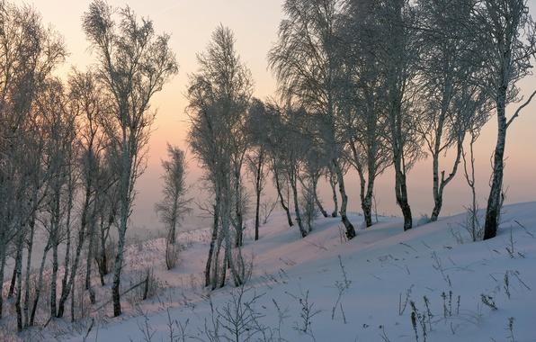 Картинка снег, природа, берёзы