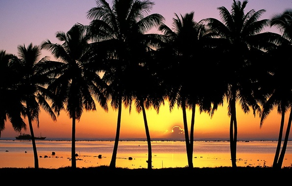 Картинка пальмы, Закат, Остров, Аитутаки