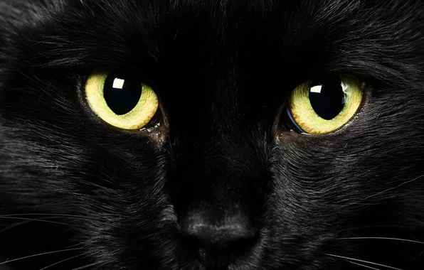 Картинка глаза, взгляд, фон, черный кот