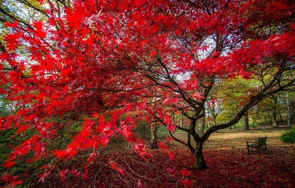 Картинка осень, листья, парк, дерево, скамья, багрянец