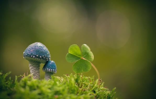 Картинка макро, фон, грибы, мох, листики, кислица, Строфария сине-зелёная
