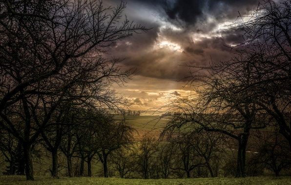 Картинка поле, облака, деревья, тучи, вид, пашня