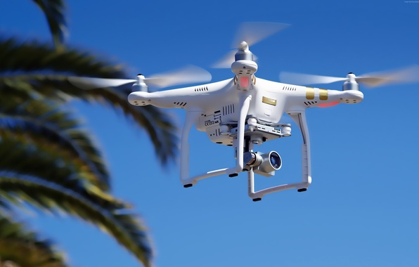 Картинка Phantom, white, palm tree, drone, high tech, quadcopter, DJI Phantom 3