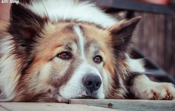 Картинка взгляд, друг, преданность, собака, пес