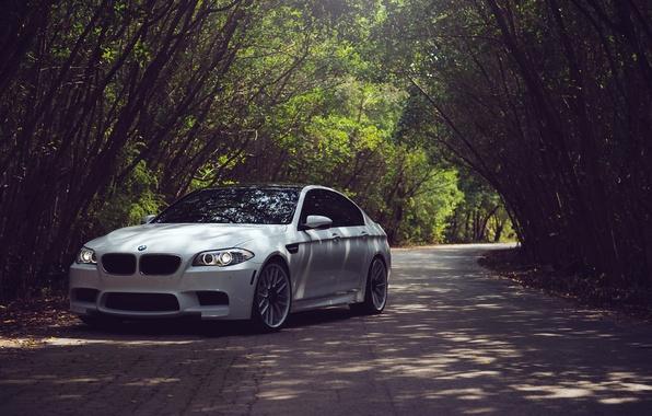 Картинка Дорога, Белый, BMW, БМВ, White, F10