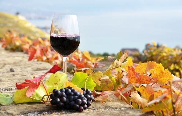 Осенние пейзажи фото скачать бесплатно