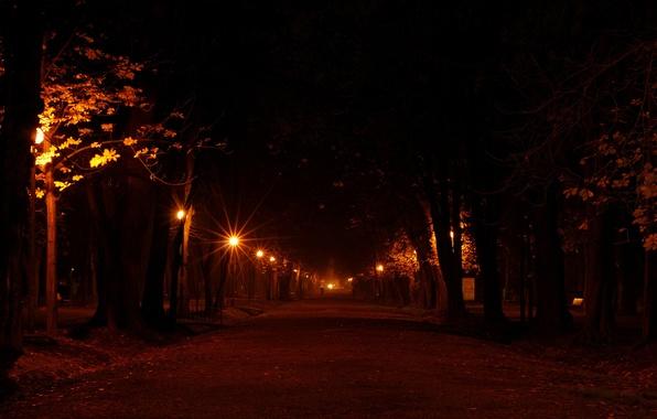 Картинка дорога, свет, деревья, ночь, огни, города, дерево, настроение, улица, романтика, дороги, вечер, фонари, фонарь, аллея, …