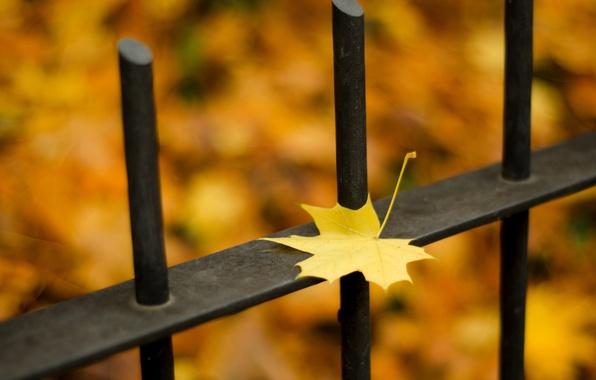Картинка осень, листья, макро, природа, забор, nature, autumn, leaves, fence, сезон, season, fall