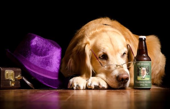 Картинка бутылка, юмор, шляпа, очки, лежит, чемодан, на полу, Ретривер