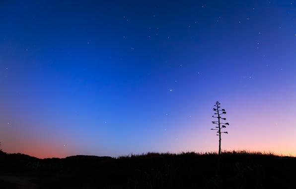 Картинка небо, звезды, пейзаж, синий, восход, дерево, рассвет, утро, сумерки, алоэ, Miramar