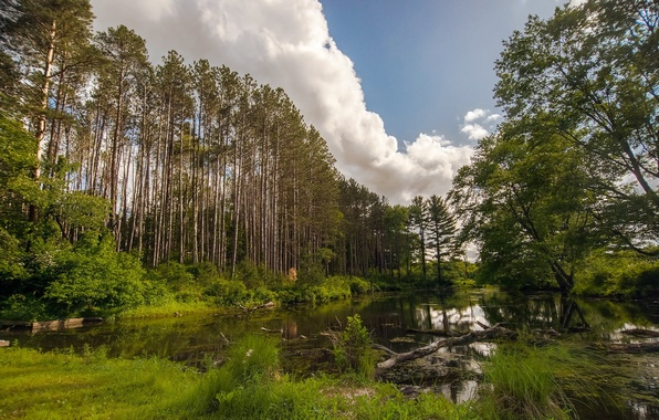 Картинка лес, лето, пейзаж, природа, озеро