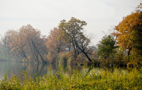 Картинка осень, трава, деревья, туман, река, берег