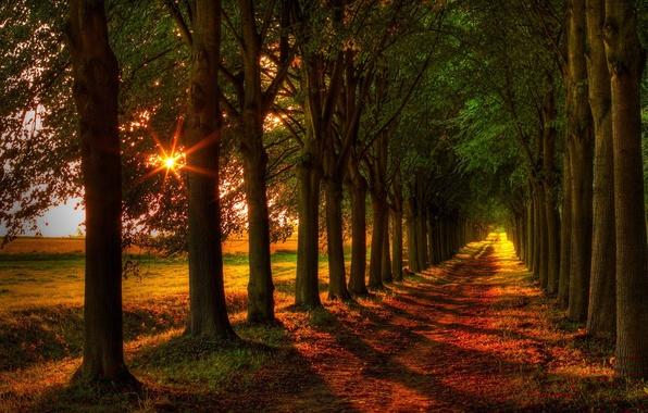 Картинка дорога, поле, осень, лес, листья, деревья, природа, colors, colorful, forest, road, trees, field, nature, autumn, …