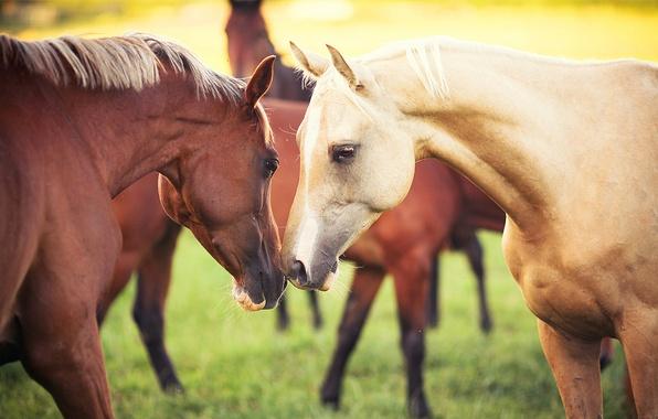 Картинка животные, трава, природа, кони, пара, Лошади