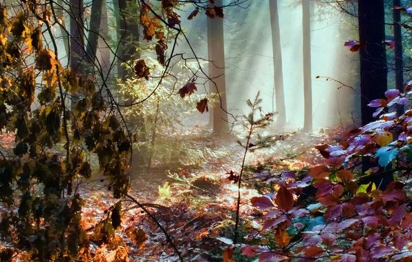 Картинка осень, лес, листья, лучи, свет, деревья, цвет, радуга