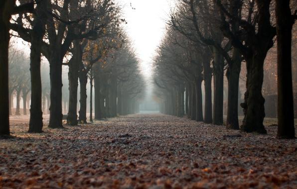Картинка осень, город, улица