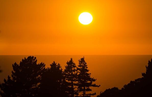 Картинка море, небо, солнце, деревья, закат, горизонт, силуэт