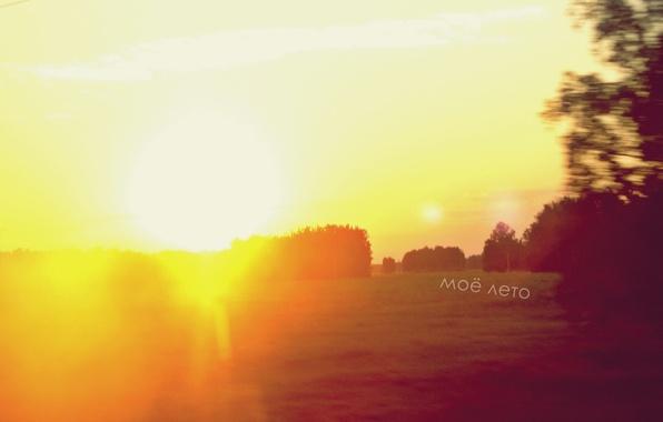 Картинка поле, лето, солнце, свет, деревья, полет, радость, счастье, оранжевый, яркий, мое лето