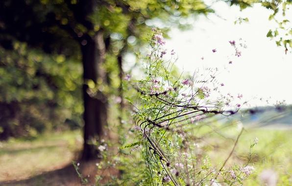 Картинка лето, цветы, природа, дерево, сетка, фокус, ограда, размытость, день, боке