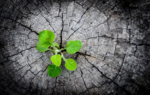 Картинка зелень, листья, макро, зеленый, фон, обои, черный, росток, wallpaper, широкоформатные, background, полноэкранные, HD wallpapers, широкоэкранные