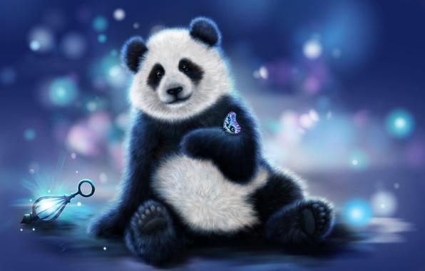 Картинка цвета, рендеринг, фон, бабочка, медведь, панда
