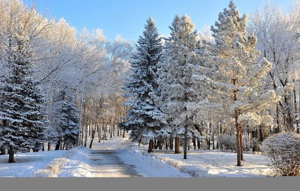 Картинка фото, Природа, Зима, Деревья, Снег, Лес