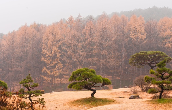 Картинка осень, лес, небо, деревья, туман, склон, дымка