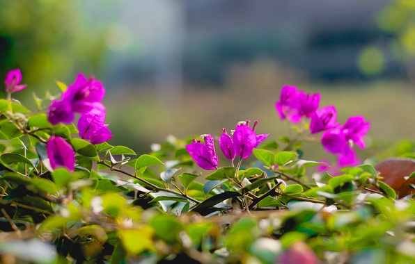 Картинка листья, цветы, ветки, розовые