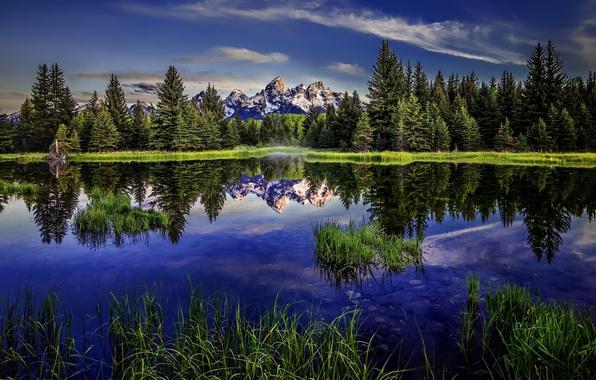 Картинка лес, озеро, отражение, Вайоминг, Wyoming, Гранд-Титон, Grand Teton National Park, Скалистые горы, Rocky Mountains, Beaver …