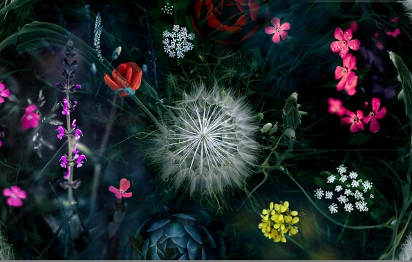 http://img2.goodfon.ru/wallpaper/big/d/64/cvety-priroda-montazh-4688.jpg