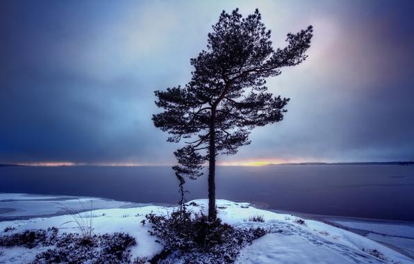 Картинка пейзаж, дерево, Sweden, Bergvik, Varmland