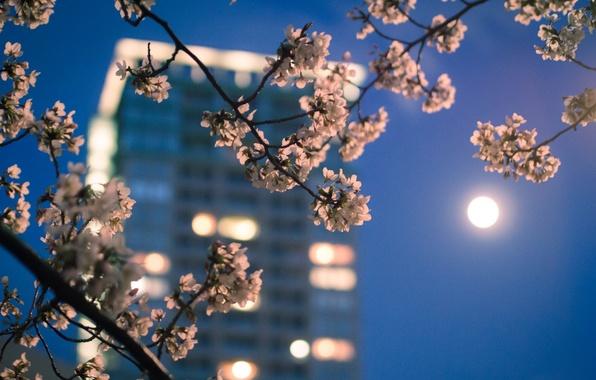 Картинка макро, город, огни, луна, цвет, ветка, весна, вечер, Япония, сакура, Токио