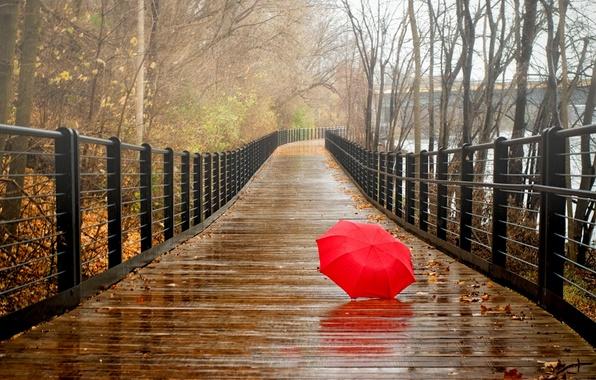 Картинка осень, лес, листья, вода, деревья, мост, природа, парк, река, дождь, вид, зонт, прогулка, forest, river, …