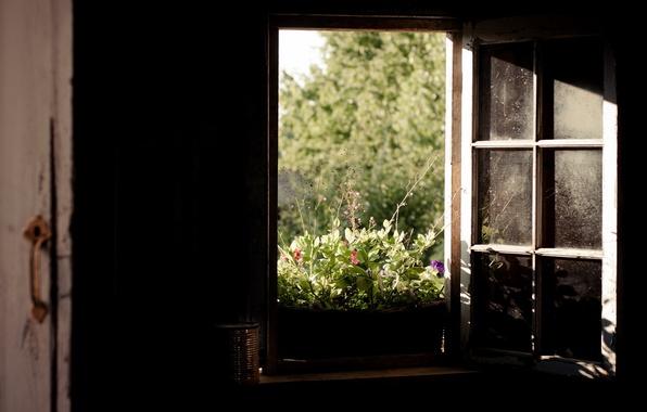 Картинка природа, комната, окно