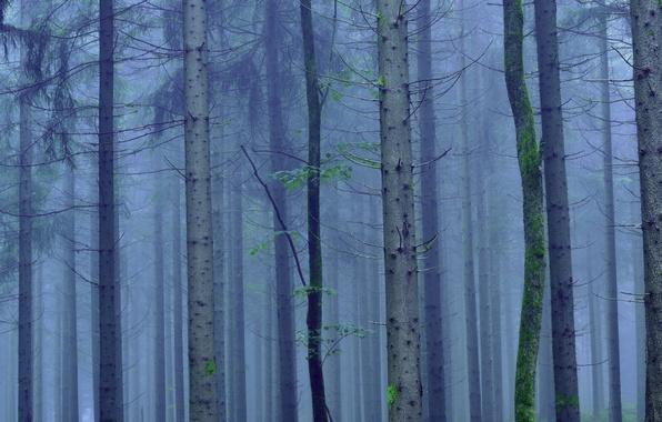 Фото обои туман, деревья, ствол, лес