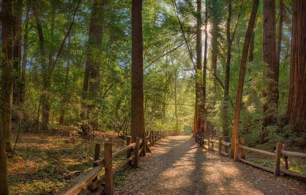 Картинка дорога, лес, солнце, лучи, ограда