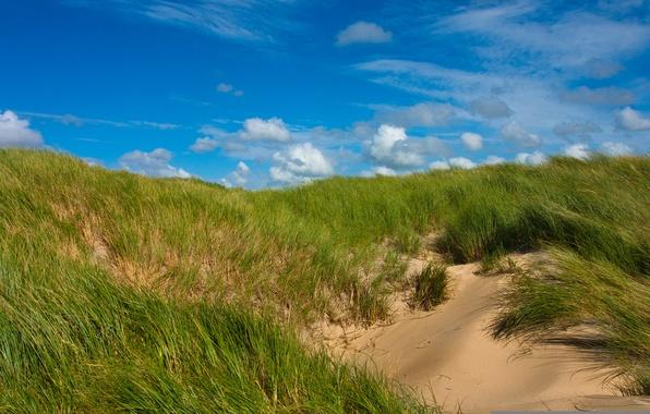 Картинка песок, зелень, небо, трава, облака, холмы, дюны, солнечно